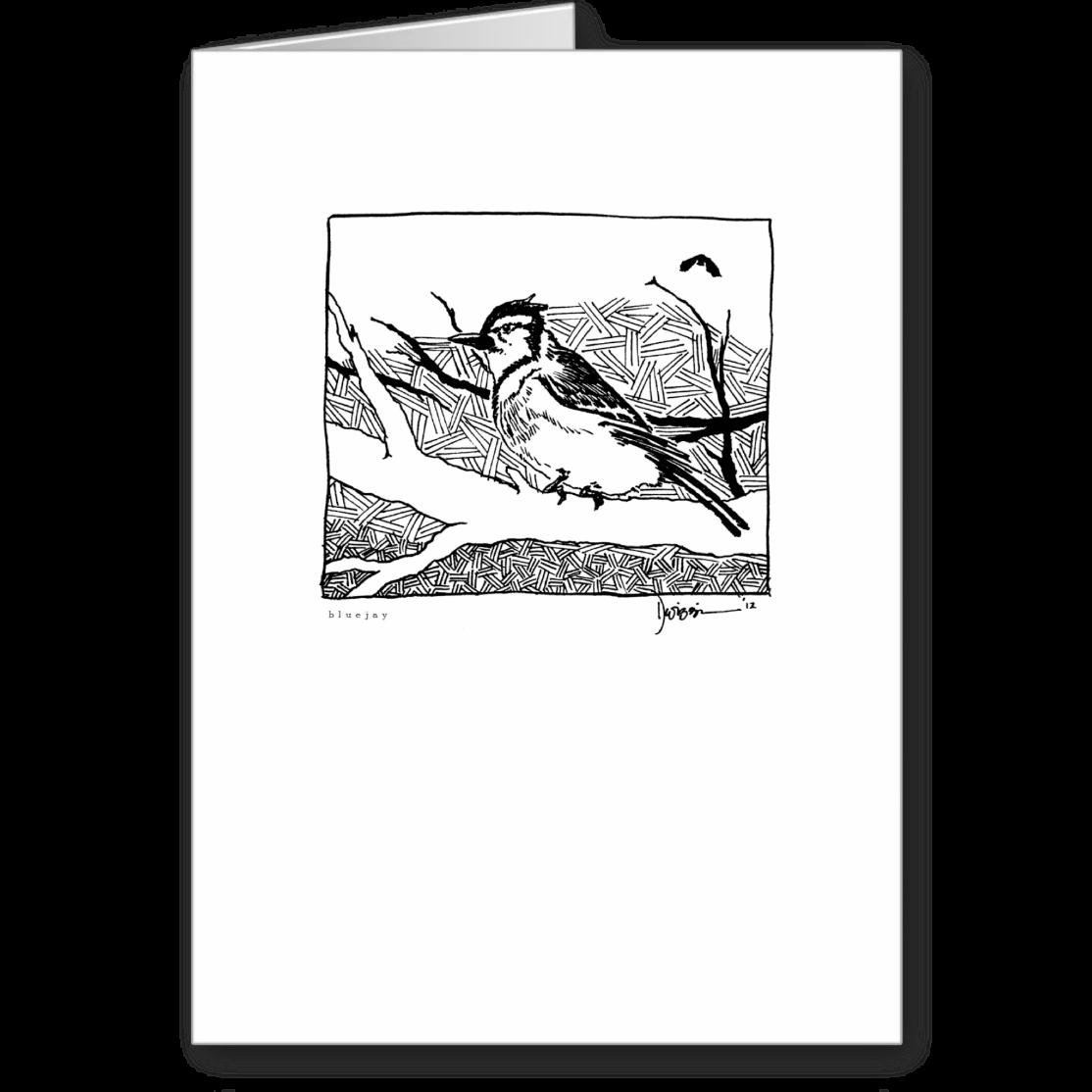 Winter Birds: Blue Jay